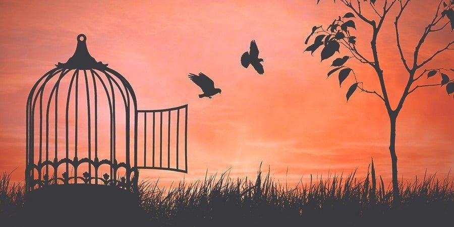 DEPENDÊNCIA EMOCIONAL E RELAÇÃO ABUSIVA: a libertação definitiva - Janaina Campos - Viva o relacionamento que você merece